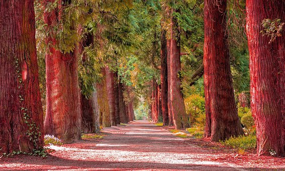 Nature, Trees, Red Forest, Landscape, Autumn, Light