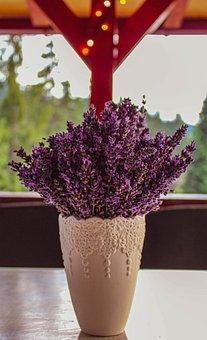 Lavender, Bokeh, Plant, Nature, Purple, Bloom, Flowers