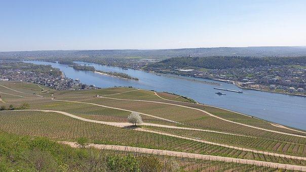 Vineyards, Rhine, Rüdesheim, Vineyard, Landscape