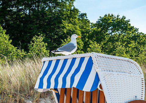 Bird, Gull, Seagull, Animal, Nature, Seaside, Sea