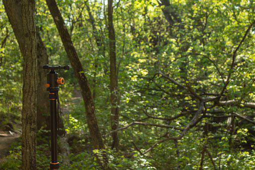 Tripod, Photography Equipment, Trees, Forest, Green