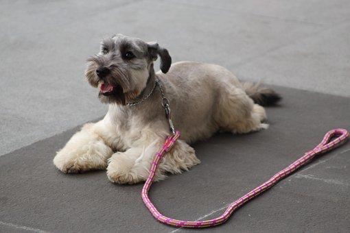 Dog Training, Stay, Calm, Dog, Perro