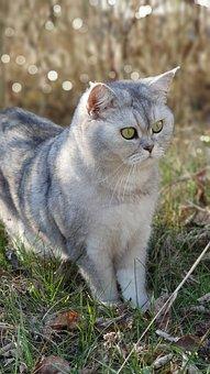 Cat, Cat's Eyes, Pretty Cat, Beautiful Cat, Green Eyes