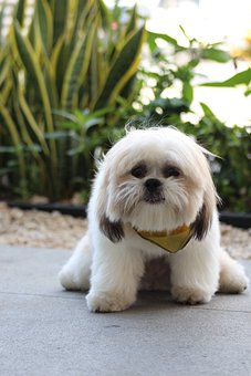 Scared Dog, Caniche, Dog Training, Trust