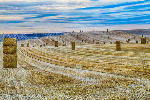Harvest, Straw, Fields, Field, Agriculture, Landscape