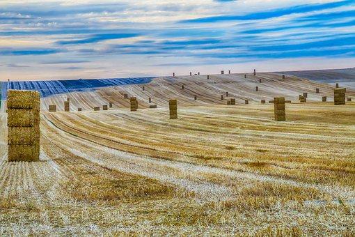 Harvest, Straw, Fields, Field