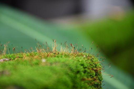 Monsoon, Ferns, Green, Plant, Nature, Leaf, Moss, Flora