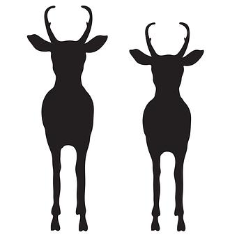 Pronghorn, Animal, Wild, Antelope, Nature, Mammal