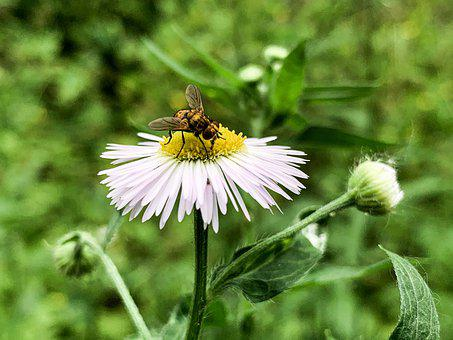 Kiev, Ukraine, Nature, Forest, Insect, Flower, Daisy