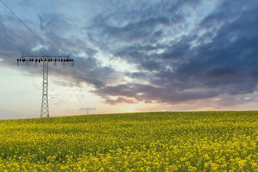 Field Of Rapeseeds, Yellow, Conductor, Landscape
