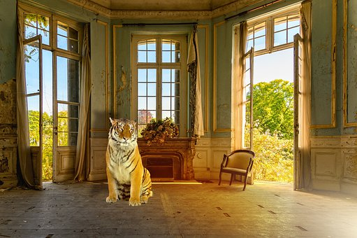 Tiger, Animal, Bengal Tiger, House, Old Bat, Garden
