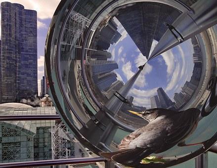 Reflection, City, Bird, Architecture