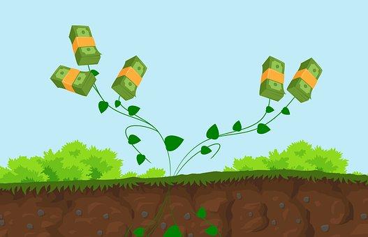 Plant, Wealth, Cash, Money, Finance, Business
