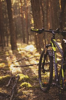 Bike, Kross, Forest, Tree, Nature, Autumn, Forests