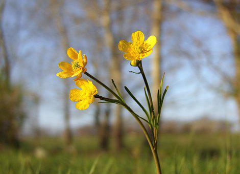 Flower, Yellow, Flexible, Spring, Field, Plant