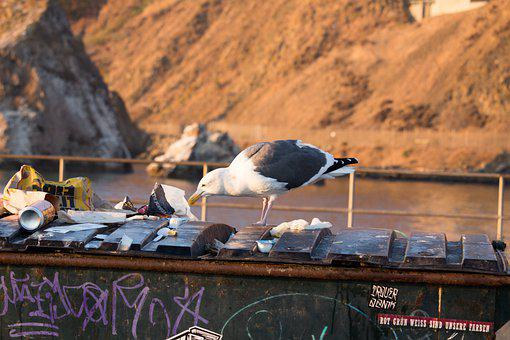 Seagull, Plastic, Waste, Pollution, Danger, Environment