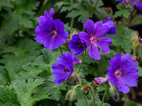 Flower, Purple, Sheet, Green, Background, Group, Flora