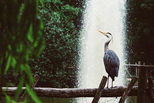 Heron, Grey Heron, Fountain, Park, Nature, Bird