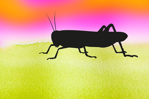 Grasshopper, Graphically, Insect, Nature, Animal
