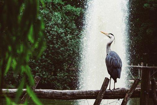 Heron, Grey Heron, Fountain, Park, Nature, Bird