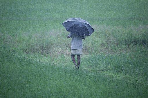 Rainy, India, Asia, Drops