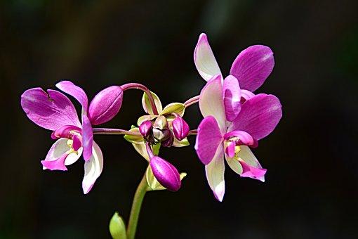 Erdorchidee, Close Up, Blossom, Bloom, Rarely, Asia