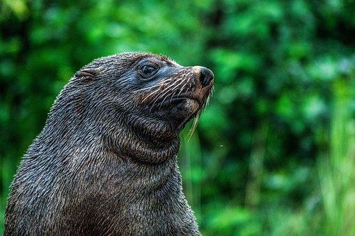 Seal, Zoo, Robbe, Meeresbewohner, Water, Sea Lion