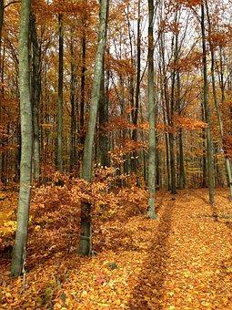 Forest, Autumn, Colors, Autumn Gold, Landscape