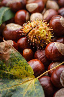 Castanea, Chestnut, Autumn, Nut, Buckeye, Oak, Ripe