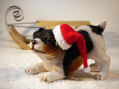Christmas, Dog, Santa Hat, Slide, Christmas Time