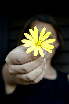 Flower, Yellow, Daisy, Peace, Relaxation, Hold, Hand