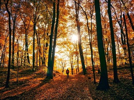 Autumn, Fall, Colorful, Man, Walking, Fallen Leaves