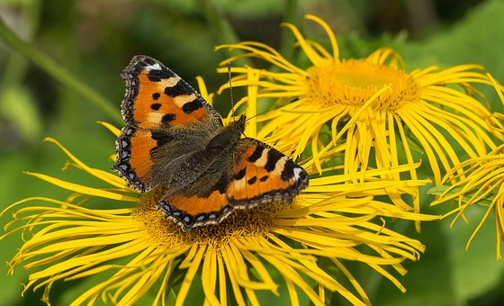 Butterfly, Insect, Summer, Colorful, Nature, Spring