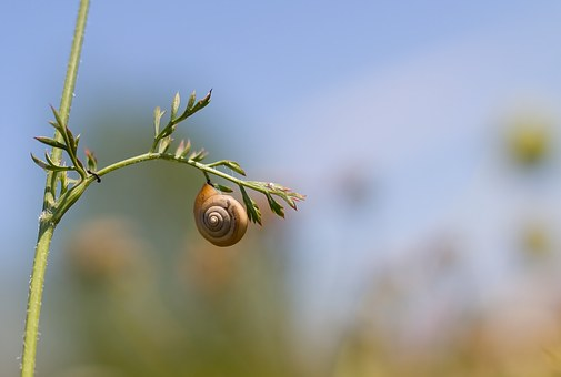 Worm, Conch, Nature, Snail, Spring, Snail Shell, Flora