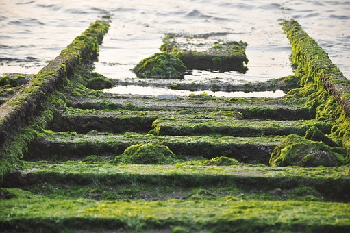 Moss, Rail, Sea, Ruins, Barren