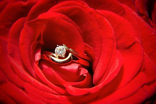 Red, Rose, Flower, Wedding, Ring, Concepts, Love