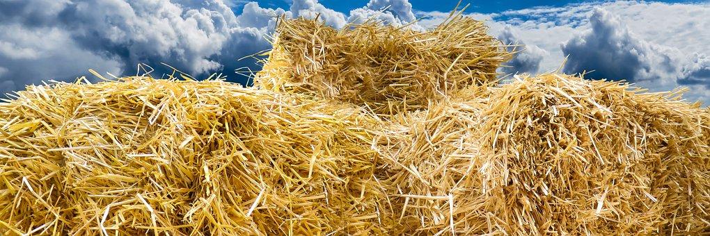 Straw Bales, Autumn, Straw, Flyers, Field, Harvest