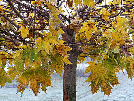 Tree, Foliage, Autumn, Yellow Leaves, Nature