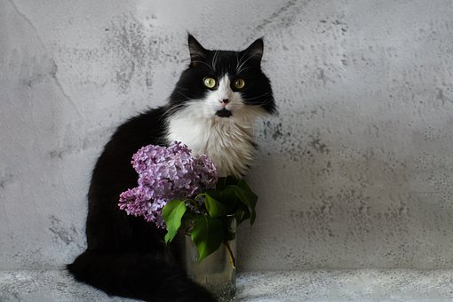 Lilac, Cat, Glass, Flowers, Branch