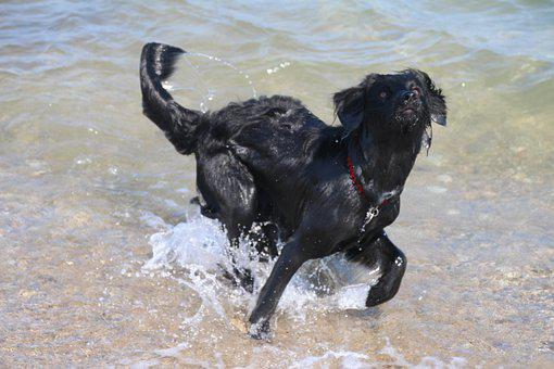 Dog In The Water, Wet Dog, Playing Dog