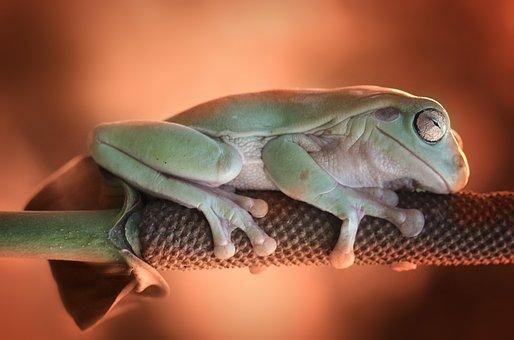 Frog, Sleeping, Leave, Sleep, Animal, Green, Figure