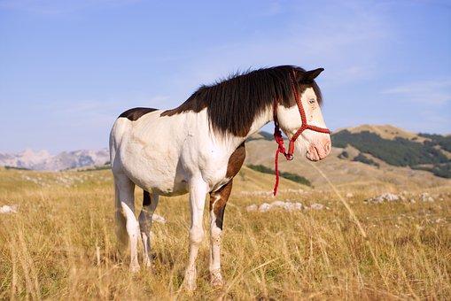 Horse, Nature, Pasture, Landscape, Animals, Mountains
