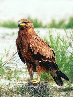 Wonderful, Bird, River, Side, Bangladesh