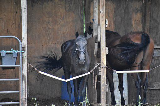Horses, Stable, Horse Flies, Barn, Nature, Head, Tail