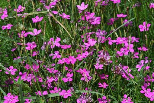 Prato, Flowers, Color, Violet, Nature, Summer, Scrap
