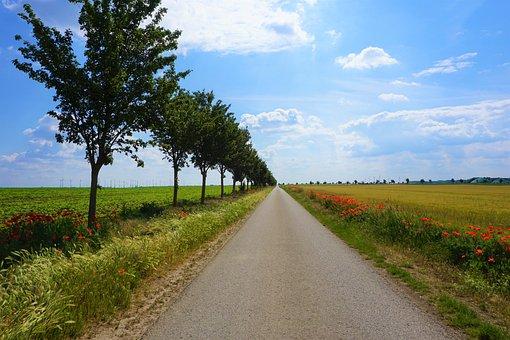 Field, Landscape, Nature, Green, Lane, Sky, Arable