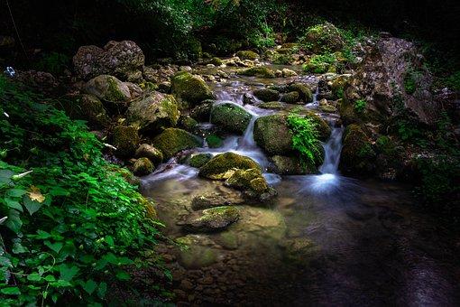 Torrent, Stream, River, Vegetation, Forest, Jungle