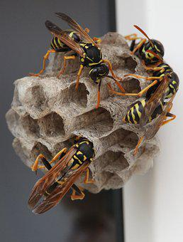 Wasps, Brood Care, Macro Photography, Insect, Combs