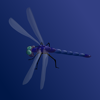 Dragonfly, Insect, Darning Needle