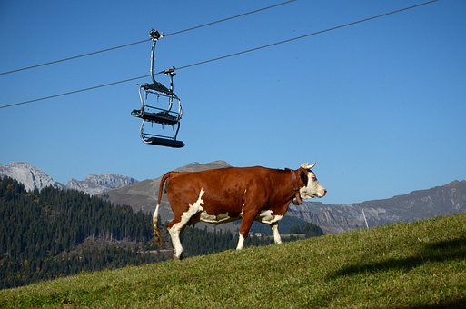 Cow, Chair Lift, Mountain, Mountains, Nature, Landscape